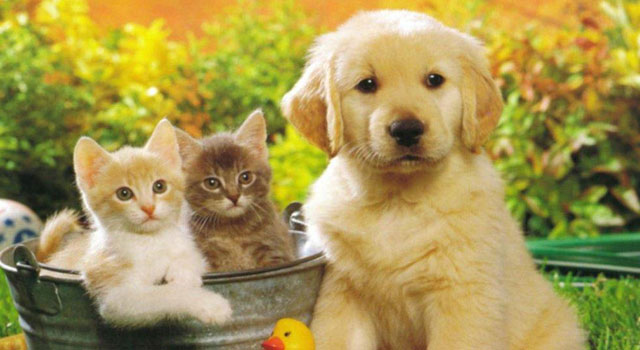 turismo pet-friendly